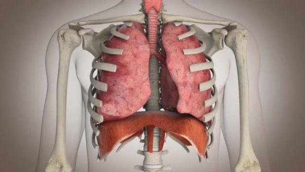 Enfermedades del Aparato Respiratorio, en Google Salud  News