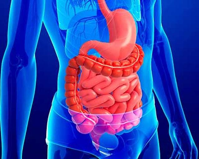 Descripción del Sistema Digestivo, Doctor Aurelio Iván Nuñez