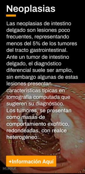 banner neoplasias.jpg