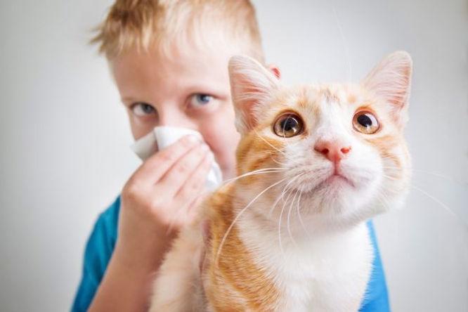 Las Alergias más Comunes, Google Salud Noticas