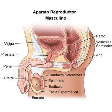 ¿Cuándo ir al Urólogo?, Disfunción Sexual Masculina, Doctor Rodriguez Lay, Google Salud News