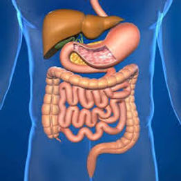 Cirugía Gastrointestinal, MSN Salud