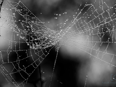 Spiderwebs and the importance of 'playing'!