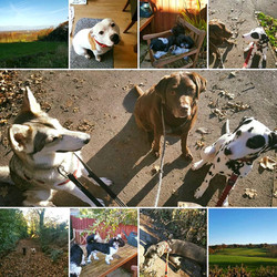 all about pets collage