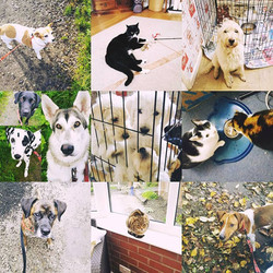 all about pets collage 1