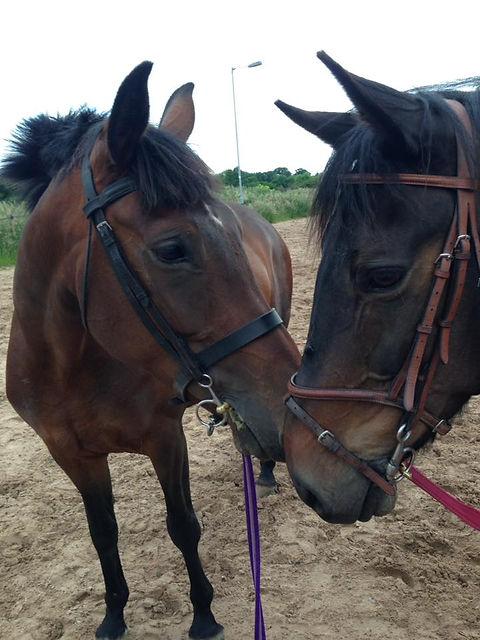 Equine Care Services Congleton