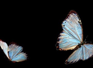 Butterflies Ascending