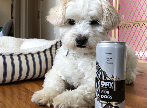 Introducing DRY Drinks For Dogs