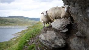 Yahweh Roi- The Lord is my Shepherd