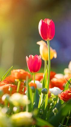 Toowoomba Flowers #3