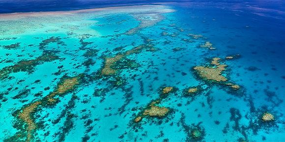 Opal Reef #2