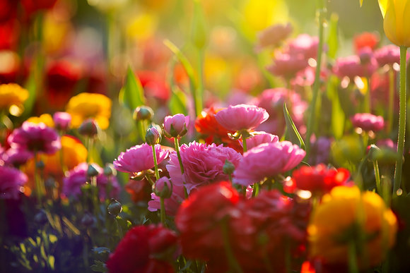Toowoomba Flowers #6