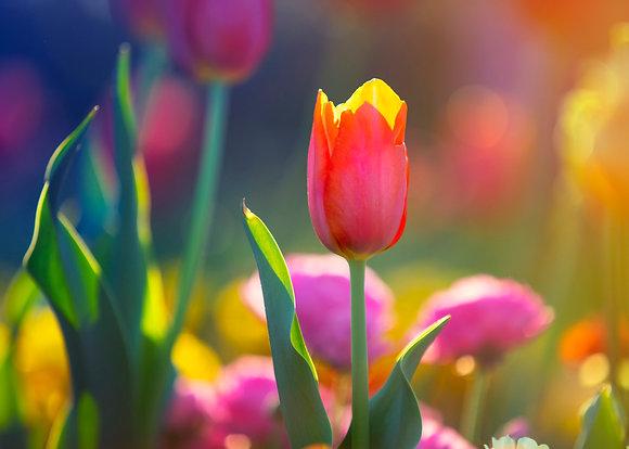 Toowoomba Flowers #7