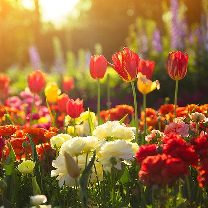 Toowoomba Flowers #2