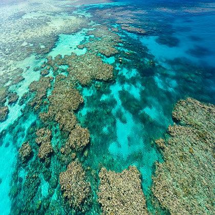 Opal Reef #1