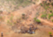 cattle-aerial.jpg