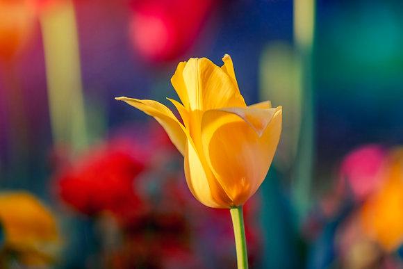 Toowoomba Flowers #4