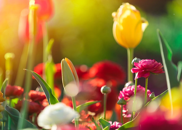 Toowoomba Flowers #1