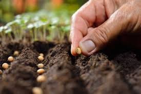 What are you Sowing!?