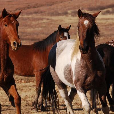 khotsohorses.jpg