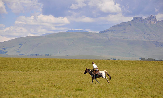 Khotso_Lodge_&_Horse_Trails_Steve_Horse_