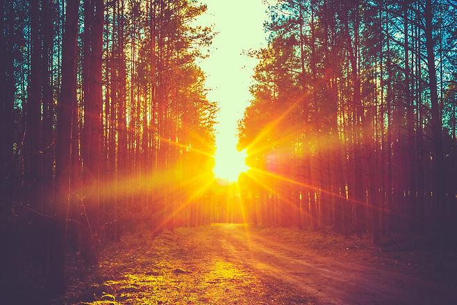 Forest Road Under Sunset Sunbeams. Lane