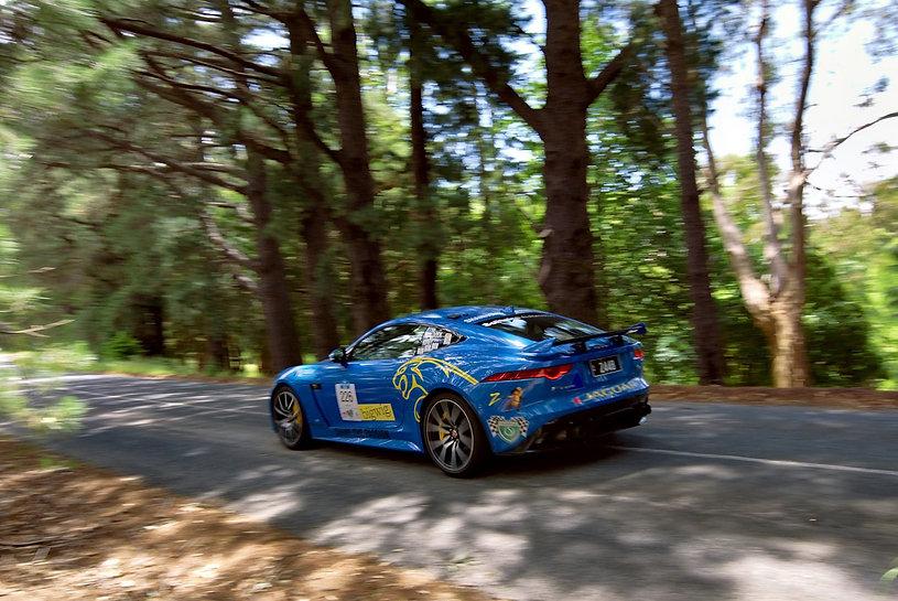 Jaguar on the prowl.jpg