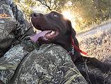 Diesel - Client Dog.jpg