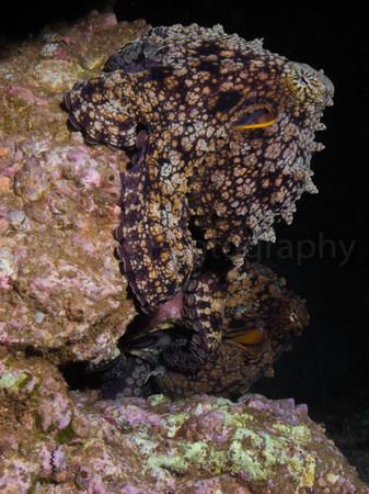 octopi1216.jpg