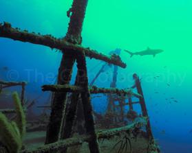 sharkactualfinal1620.jpg