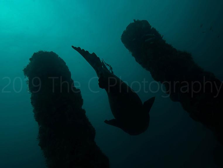 grouper1216.jpg