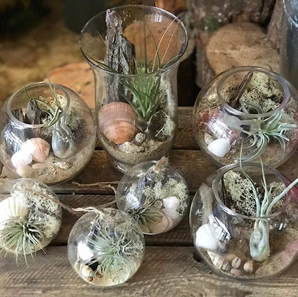 Air plant terrariums of all different si