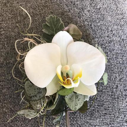 Simple yet elegant single Phalaenopsis O