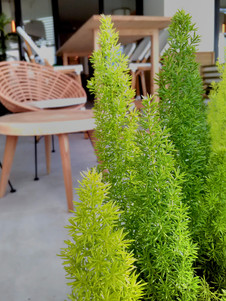 Jardineria hotelera_hoteles varios