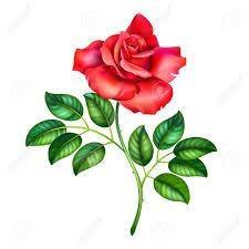 Yunnus Emre Rose.jpg