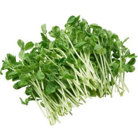 Snow Pea Sprouts 100gm