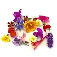 Wholesale Edible Flowers