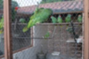 papagaios sendo cuidados