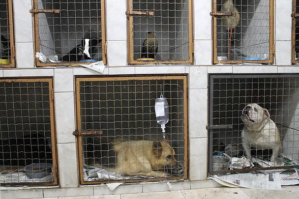 cachorros recebendo cuidados de veterinario