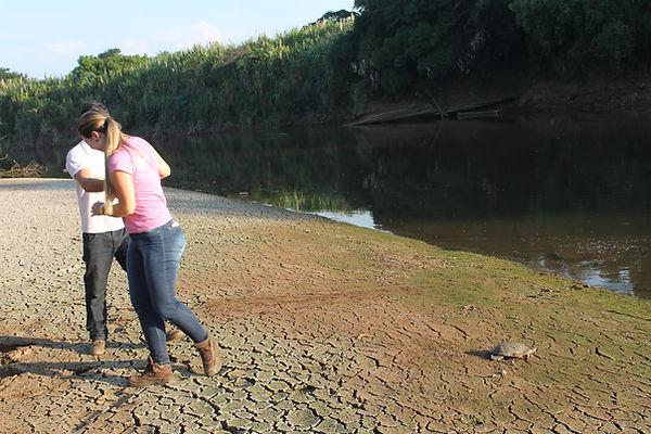devolvendo tartaruga para a natureza