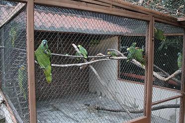 recinto dos papagaios