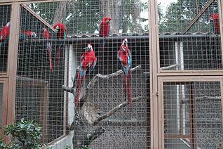 recintos de tucanos