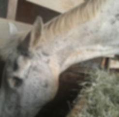 Cavalo com olho arrancado por carroceiro