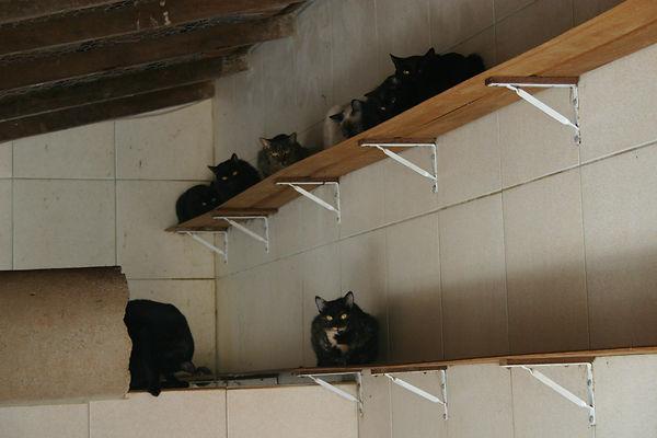 gatos doentes e abandonados