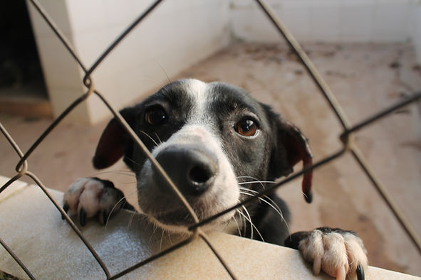 cao triste cachorro abandonado