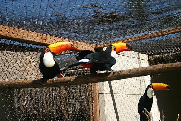 recinto ds tucanos