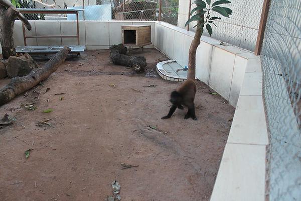 recinto de macacos
