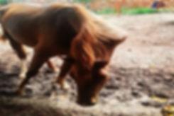 Cavalo com pescoço quebrado abandonado
