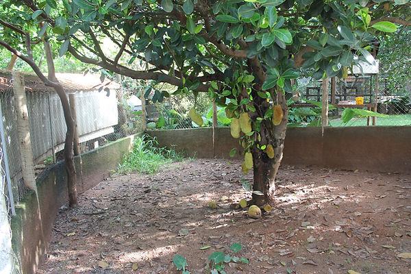 recinto dos tamanduas