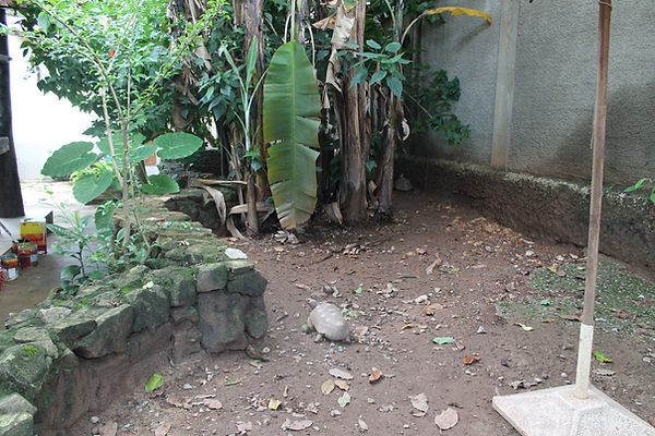 jabuti e tartaruga sendo cuidada